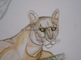 florida-panther-3