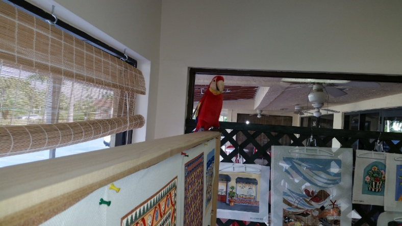Needlepoint Land's parrot